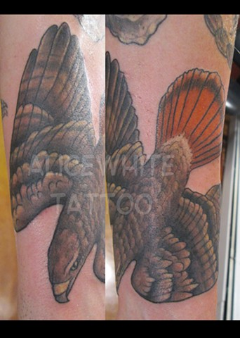 Alice White - Red Tail Hawk Tattoo, Provincetown tattoo, Cape Cod tattoo, Ptown tattoo, truro tattoo, wellfleet tattoo, custom tattoo, coastline tattoo