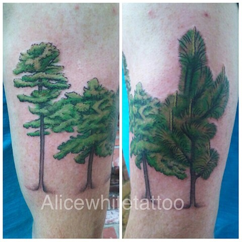 longleaf pine tree tattoo, plant tattoo, Provincetown tattoo, tree tattoo, Cape Cod tattoo, Ptown tattoo, truro tattoo, wellfleet tattoo, custom tattoo, coastline tattoo