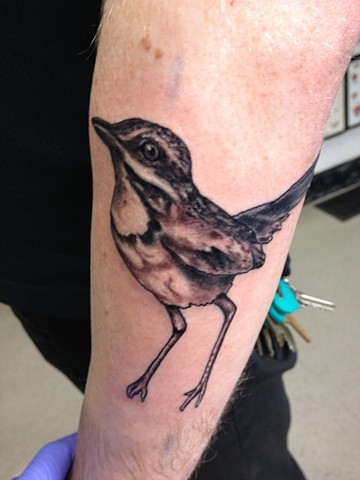Tina Marie DeCarlo - bird tattoo,  Provincetown tattoo, Cape Cod tattoo, Ptown tattoo, truro tattoo, wellfleet tattoo, custom tattoo, coastline tattoo