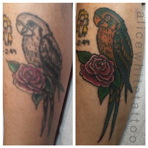 parrot tattoo, bird tattoo, tattoo, Provincetown tattoo, Cape Cod tattoo, Ptown tattoo, truro, wellfleet, custom tattoo, coastline tattoo