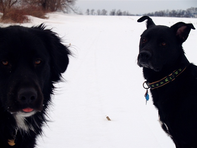 Brothers in Winter