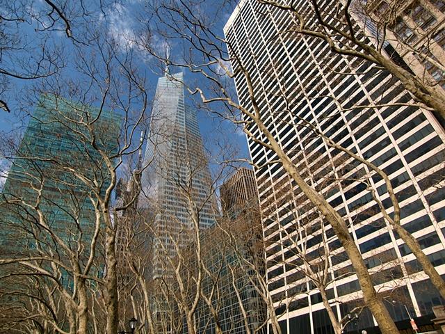 Tall Trees & Taller Buildings