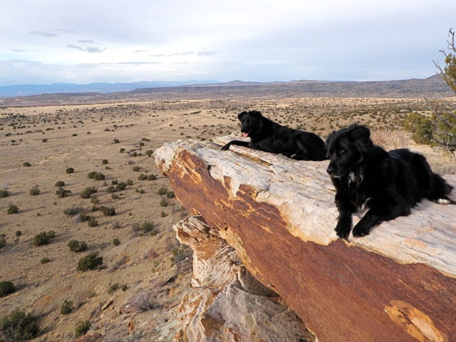Bowie & Dio on Our Backyard Cliffs