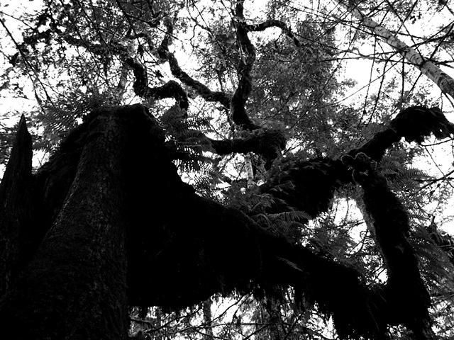 The Zig Zag Tree II