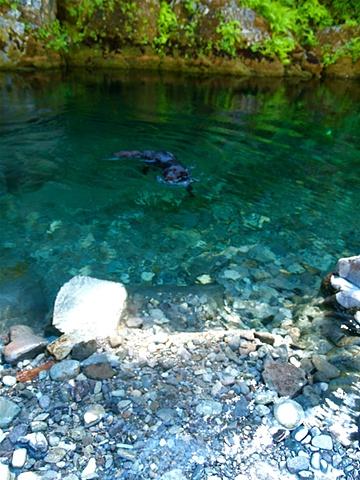 A Swim Opal Creek