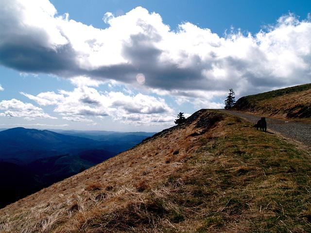 Up Mary's Peak