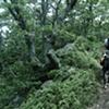 Shenandoah Trail