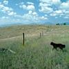 Montana Rangeland