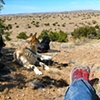 Desert Dog Pack