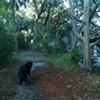 Skidaway Swamp