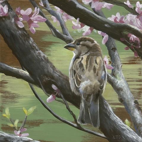 Sparrows of Spring 2