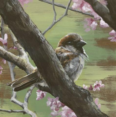 Sparrows of Spring 1