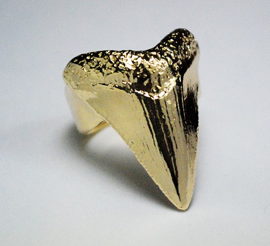 Giant gold shark tooth ring.Jewelry by Jennifer Tull Westberg