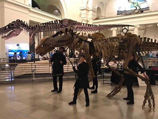 T-Rex parade puppets meet Sue!