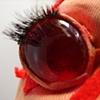 Close Up ChestBurster Eye