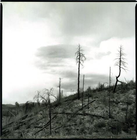 burned trees, Prescott AZ