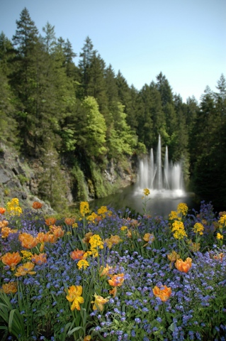 Flowers and waterfall, Victoria BC