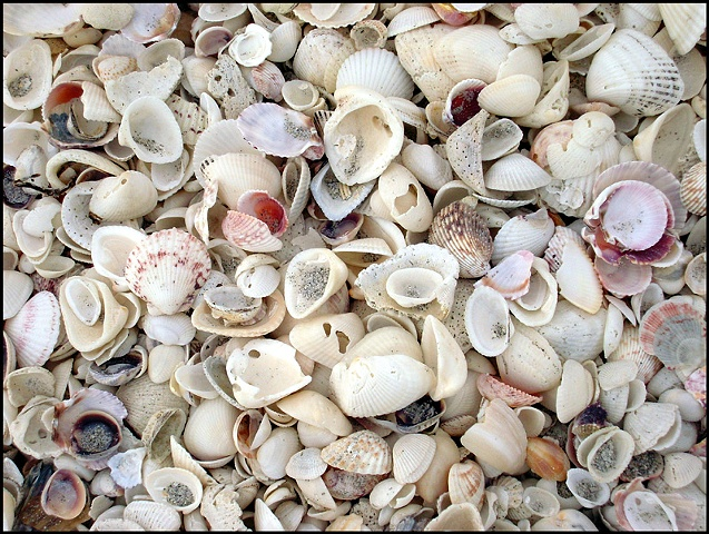 Shells at Sanibel FL