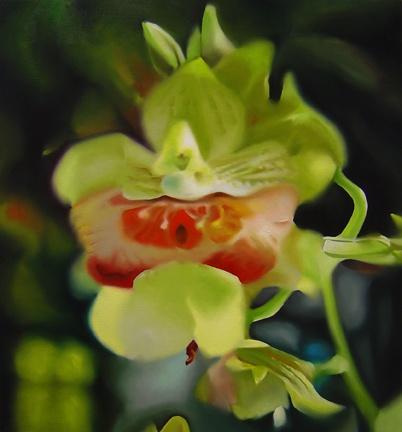 Orchids (#717)