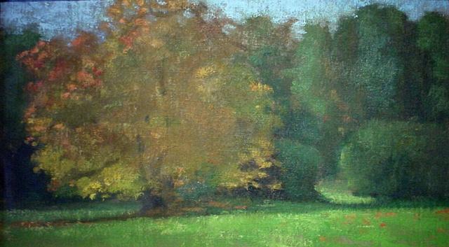 Yellow Tree Tilden Farm
