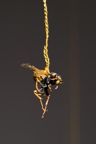 wasp detail 2