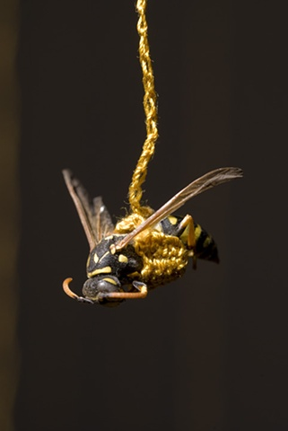 wasp detail 1