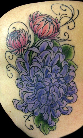 purple chrysanthemum