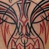 pinstripe phoenix