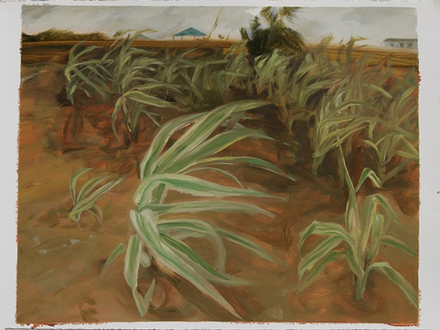 Study for Giant Reed Grass, Bolivar