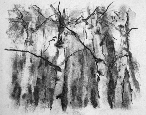 small drawing study of birch trees in charcoal
