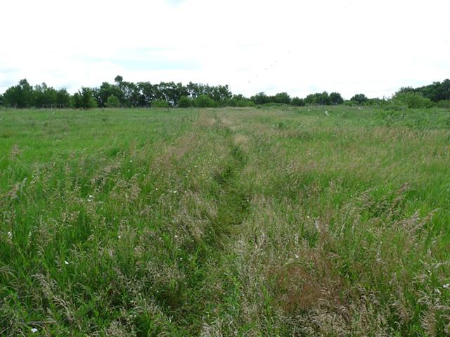 "Meadow - ""Foot Path"""
