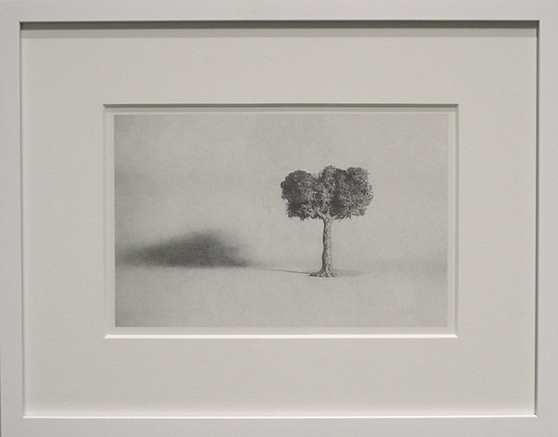 Untitled Tree (graphite drawing)