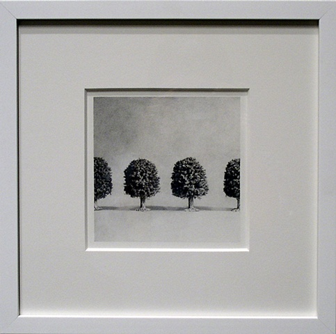 Untitled Trees (graphite drawing)