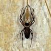 SPIDER SERIES