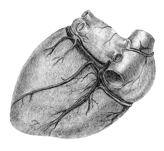 Medical Illustration Fig 4