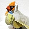 Dreams of Wings - bird 5