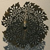 24 Tooth Doily