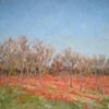 Pecan grove, late winter