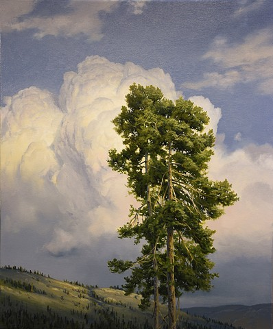 """Nicola Valley Pine"""