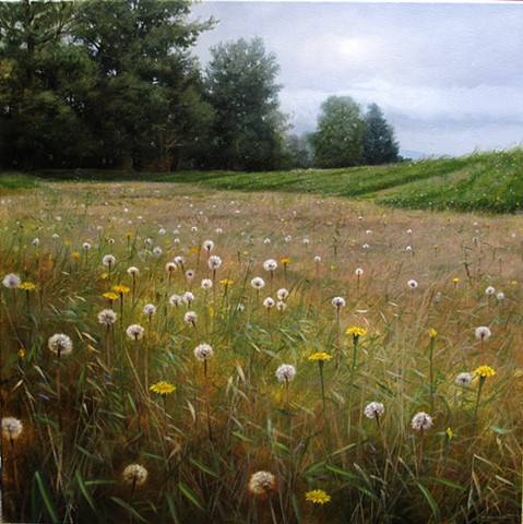 Seeding Meadow