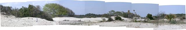 Cumberland Island 3