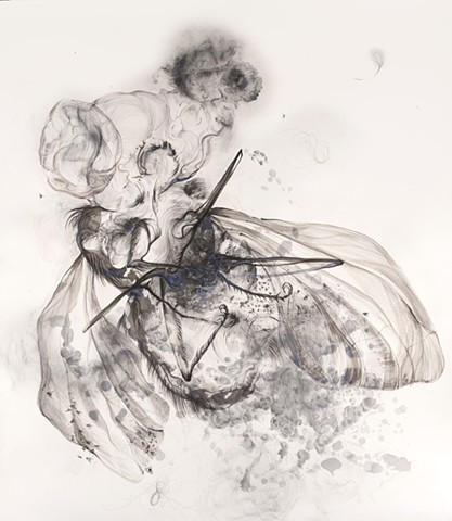 Apparition - Fly