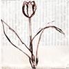 Flora No. 31