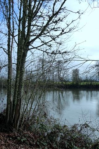The Willamette River