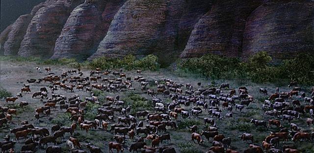 bungles cowherd1