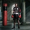 boxer_2dcomp