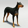 doberman 3d model and texturemap far