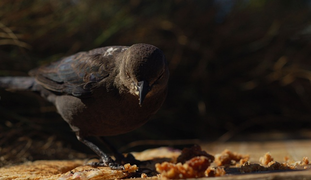 bird and crumbs