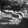 I Dream of Sheep