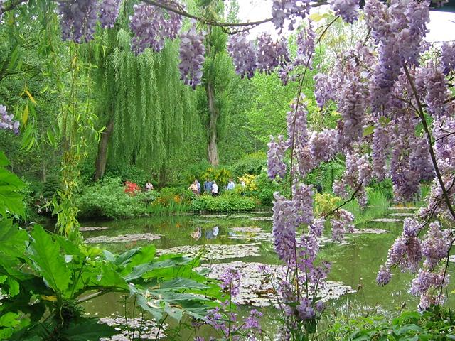 wisteria right side